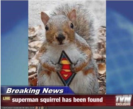 Superhero squirrel