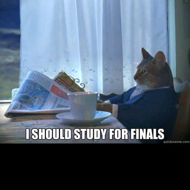 cat should study for finals