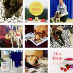 Milne Library Instagram feed